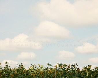 Sunflower field Photography, Georgia Photograph, Southern print, cloudy photography, country home decor, rural farm photo, vidalia, boho
