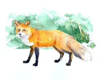 Red Fox 10 X 8 inch original watercolor painting