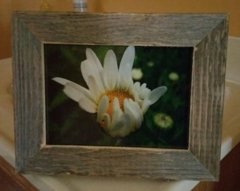 CaptureMoments! A delicate daisy :)