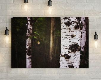 Birch Trees Canvas Art, wall art canvas, canvas print, nature art, nature photography, nature prints