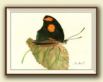 AFDRUKKEN-Grecian schoenmaker Butterfly - insect kunst tekening afdrukken aquarel schilderij kunst muur insect vlinders Kunst - Art Print door Juan Bosco