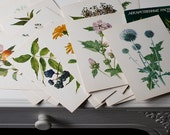Set of 32 Botanical Cards - Medicinal Herbs Illustrations, Plant Prints