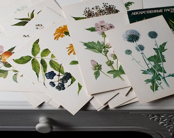 Set of 32 Botanical Cards - Medicinal Herbs Illustrations, Plant Prints