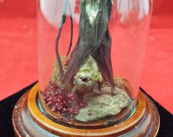 Taxidermy Bat in Glass Dome With Wooden Base-voodoo-witch-pagan-gothic-goth-mystical-bizarre