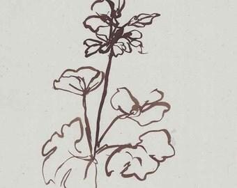 Number 42 Geranium Red
