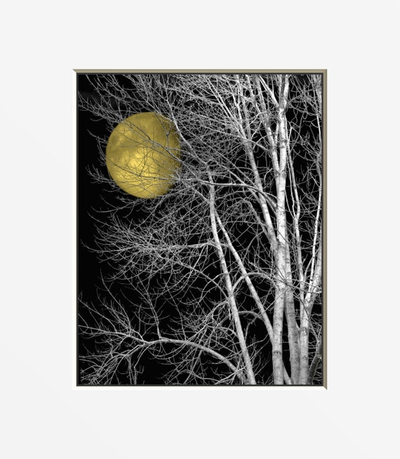 Black White Yellow Moon Tree Wall Art By Littlepiephotoart