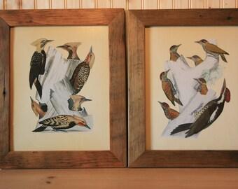 Woodpeckers in rustic frames