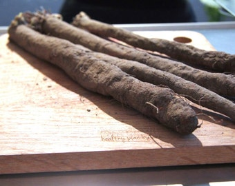 Scorzonera, or black salsify - root vegetable. Unique Heirloom gardening seeds, FREE SHIPPING