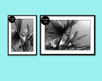 Black and White Palm Tree Photography ~ Two Photo Set  ~  10% Off Nature Photography ~ Set of 2 Prints ~ Gray Wall Art ~ Home Office Decor