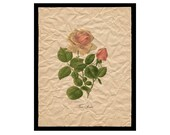 Tea Rose - Flower Artwork - Floral Art Print - 8x10 Print  - Vintage Cottage Style Decor