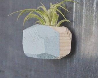 Mini Geo Magnet w/Air Plant (Natural Wood)