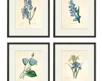 Blue botanical prints vintage flower art Cottage wall art Victorian print French wall art antique wall art Flower print Garden art print