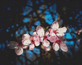 Almond Blossom PDF Cross Stitch Pattern