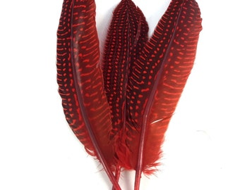 10 pc's x 20cm Red Guinea Spotted Feathers