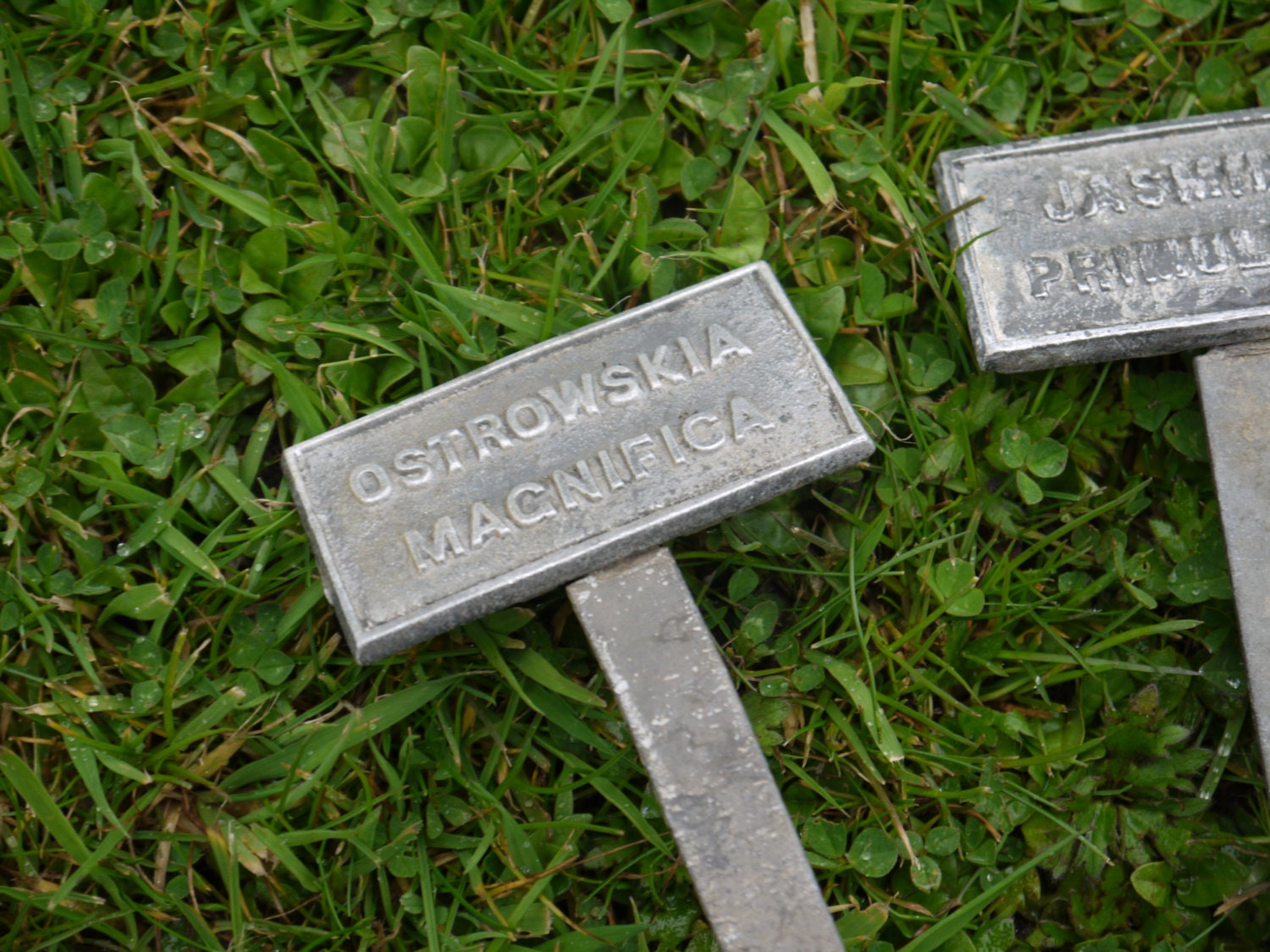 Vintage Metal Plant Labels From Vintiquetree On Etsy Studio