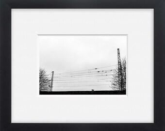 City no name dog , black and white photography print decor art, wall art,photo print