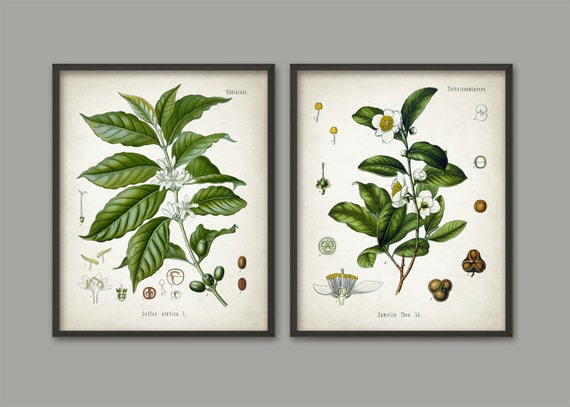 Tea and coffee wall art poster set of 2 antique by for Tea and coffee wall art