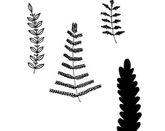 Rustic Ferns Black and White Ink Illustration  8x10