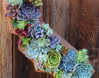 Planted California State Succulent Living Creations™ Hanging Planter