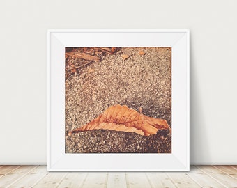 Nature photograph, still life photography, autumn leaf photo, autumn print, rustic, autumn colours, fine art print - Autumn leaf