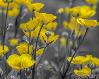 Flower Photography - Buttercup Wall Decor, Nature Picture, Selective color Bright Yellow - Fine Art Photo, Wildlife - 063