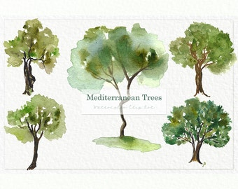 Mediterranean TREES. Watercolor clip art. Digital Watercolours clipart hand drawn. Forest wedding, olive trees for logo invitations, cypress