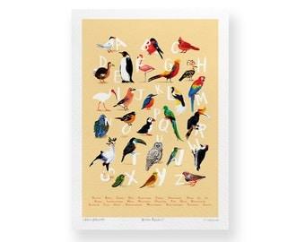 Avian Alphabet – A4 Giclée Art Print – Bird Illustration – GP11A4