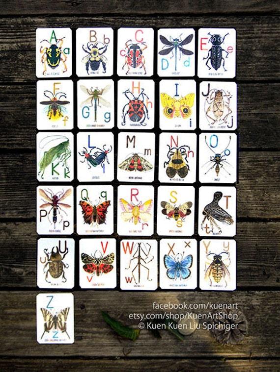 abc alphabug cards the alphabet of bugs flash cards a