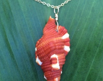Hawaiian baby triton shell necklace