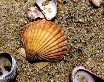 Shell Art - Framed Beach Art - Seashore Decor - By the Seashore / Beach Wall Art - Orange Wall Art - Ocean Photography / Nature Photography