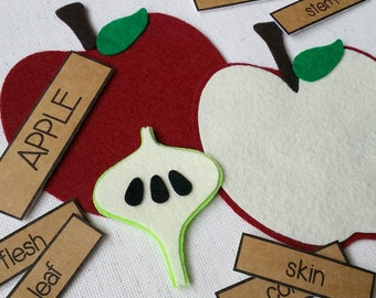 Parts of an APPLE - Felt Board Learning Set, Felt Board Stories, Felt Board Pieces, Circle Time, Educational Toys, Gifts for Kids, Preschool