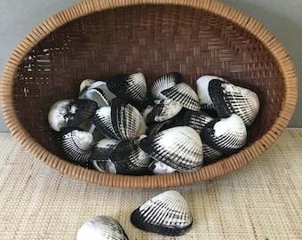 Black and White decor | Ponderous ark shells | ark shell collection | black and white seashells | beach decor | coastal decor | arc shells