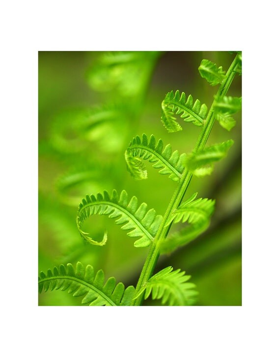 Fern photography, fern photo, fern botanical, fern fronds, fern art, fern macro photo, nature photography, fern fine art photography
