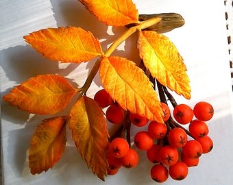 "Brooch ""Rowan"". Autumn brooch. Clay flowers . Floral brooch. Оriginal gift."