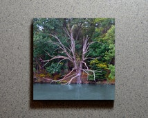 Gnarled Tree Ceramic Coaster Tile Wall Drink, Bare Branch Limb Wood Blue Water River Pond Lake Green Trees Leaves Woods Landscape Maryland