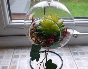 Hanging glass terrarium - faux succulent / cactus and ivy