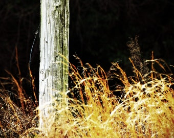 Fence Post Photography,Field Grass Photo,Brown Grass,Golden Grass Photo,Fall Photography,Rustic Photo,Rural,Abstract Photo,Western Photo,