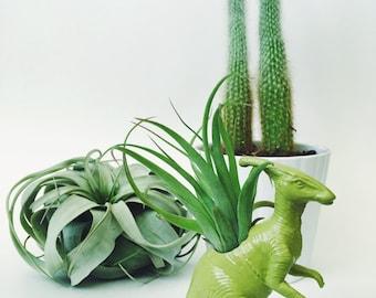 Small Chartreuse Parasaurolophus / Parasaur Dinosaur Planter Air Plant; Dinosaur Planter; Air Plant; Desk Accessory; Home Decor; Gift Idea