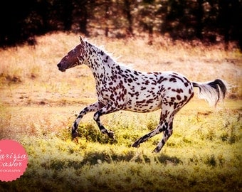 "Spotted horse colorful photographic print, ""Leopard"""