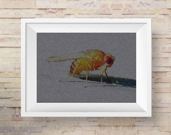DNA art - Drosophila DNA mosaic image - fruit fly genetics poster - science poster - biology art - DNA poster - science art poster