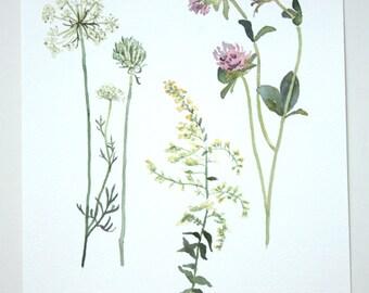 Fall Wildflowers Original Watercolor