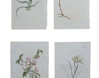 Set of Four Vintage Botanical Prints
