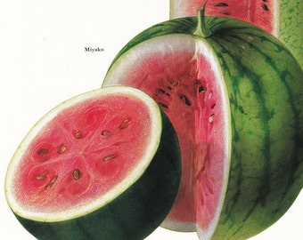 Fruit print water melon vintage Botanical Print by Marilena Pistoia kitchen decor gardening gift 8 x 11.25 inches