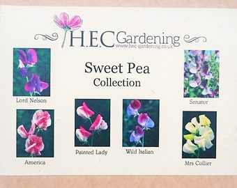 Sweetpea Collection