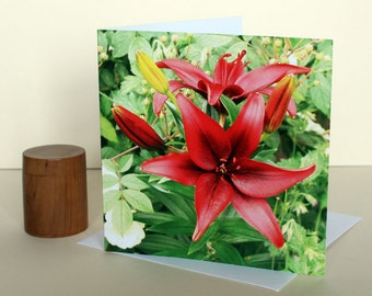 Red Lilies a Greetings Card.Celebration.Valentine Card.