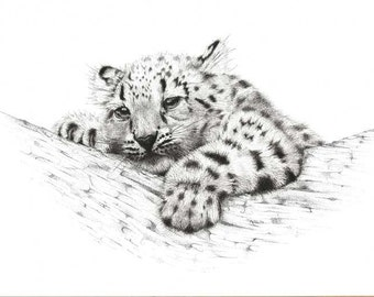 Artwork Snow Leopard Cub. Limited Edition (25) fine art print from my original pen and ink drawing.