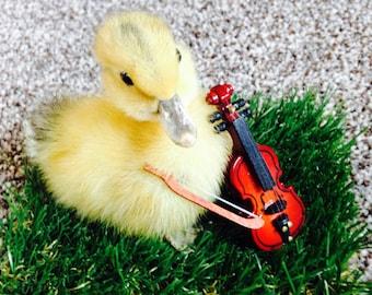 Taxidermy Duckling with Violin