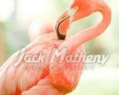 Flamingo Photo Digital Download
