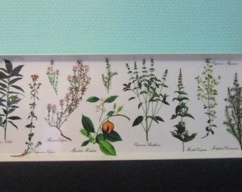Mebel tray herbs