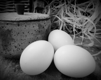 Eggs Black & White Still Life Photography, Kitchen Dining Restaurant Decor, Kitchen Wall Art, Subtle Palette, Fine Art